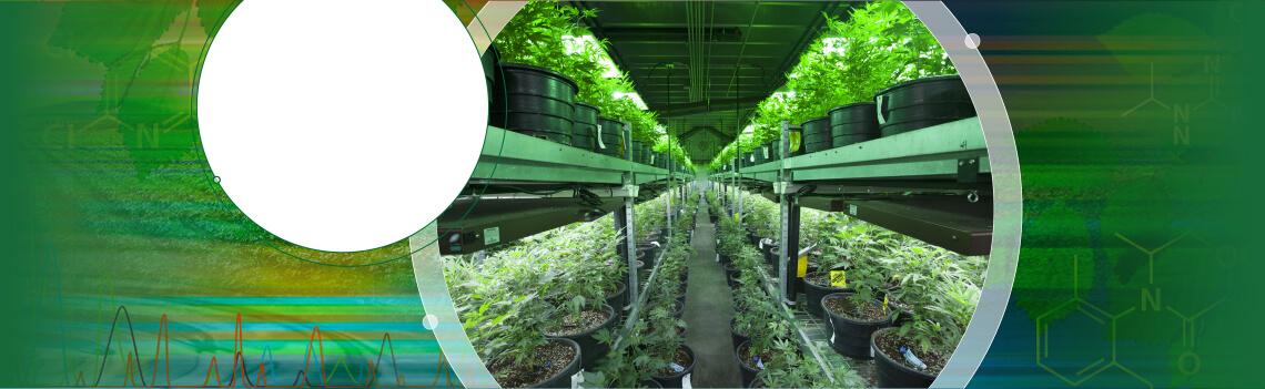 是时候扩展实验室的大麻分析能力了