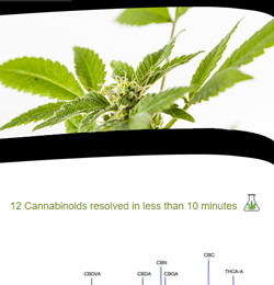 New Solutions for