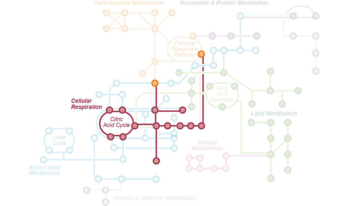 Targeted metabolomics sciex solutioingenieria Choice Image